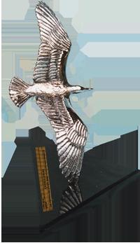 Silver-Gull2